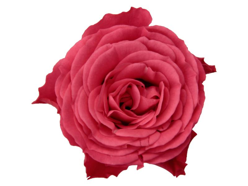 Dark Pink Romance - Closeup