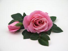 Pink Infinity® - Flower