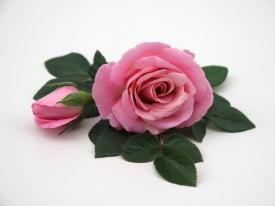 Pink Infinity® - Flower 10,5 cm