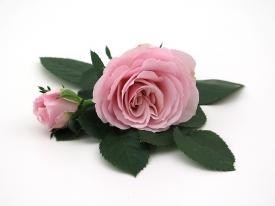 Princess of Infinity® - Flower 10,5 cm