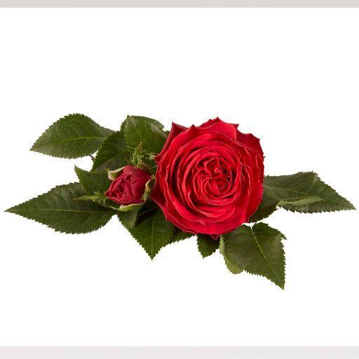 King Infinity® - Flower 10,5 cm
